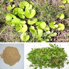 Gotu-kola-Extract-Brawn-Cosmetics-and-herbals-herbal-extracts