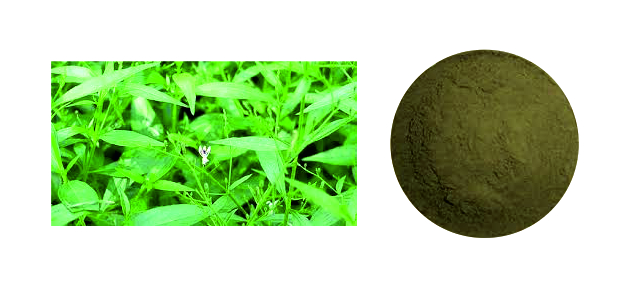 Kalmegh-Extract-Brawn-Cosmetics-and-herbals-herbal-extracts