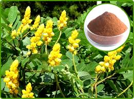 Senna-Extract-Brawn-Cosmetics-and-herbals-herbal-extracts