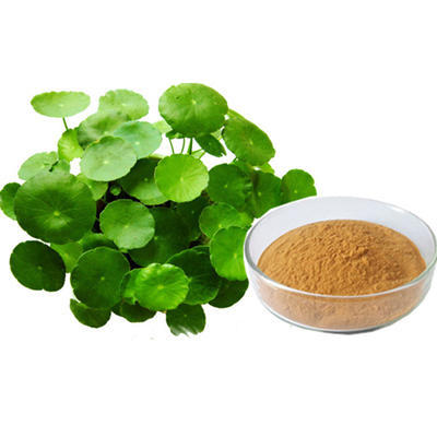 bacopa-monnieri-Extract-Brawn-Cosmetics-and-herbals-herbal-extracts